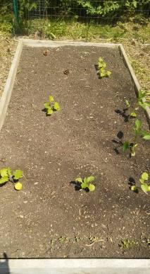Squash! Peppers! Eggplant!