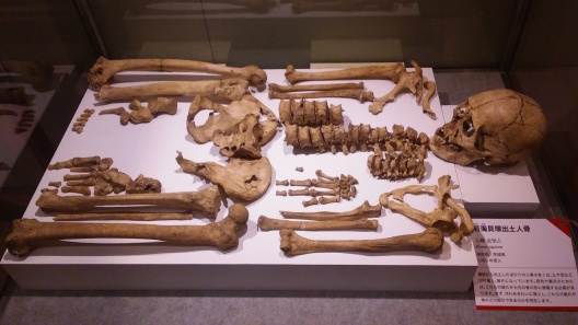 Yayoi Period Human Bones